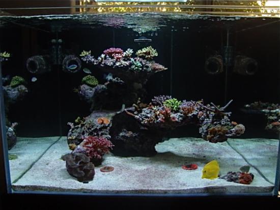 Decor Forum Aquarium Récifal Aquarium Marin Aquarium Eau De Mer